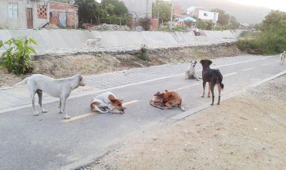 Perros ¿En que momento se pueden convertir en plaga?
