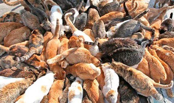 Gatos, ¿Cuándo se convierten en plaga?